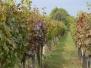 Pochod vinicemi, Mutěnice 8.10.2016